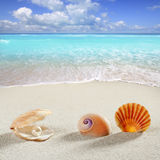 Beach summer vacation background shell pearl clam Stock Image