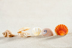 Beach summer vacation background shell pearl clam Royalty Free Stock Photos