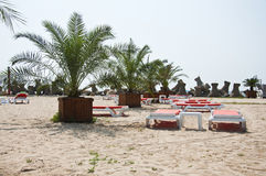 Beach sunbeds near palm trees Stock Photos