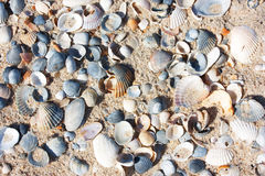 Beach on a sunny day, Background of sand and seashells Stock Photo