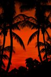 Beach Sunset. Reddish Cloudy Sky. Tropical Place Sunset. Palm Shapes. Vertical Photo Stock Images