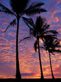 Beach at sunset. 3 palm trees on the beach at sunset Royalty Free Stock Photos