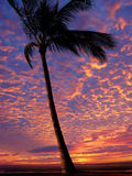 Beach at sunset. Palm tree on the beach at sunset Royalty Free Stock Image