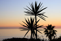 Beach at sunset. Silhouetted palms at sunset Stock Photography