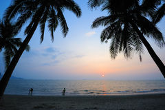 beach at sunset with palm trees Royalty Free Stock Images
