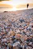Beach. Sunset with sea shells beach Stock Images
