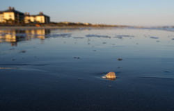 Beach sunset. An shell on a beach during sunset royalty free stock images