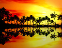 Beach sunset or sunrise with tropical palm trees. Summer travel holidays vacation. Colorful concept photo from ocean sea water