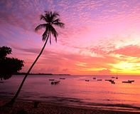 Beach at sunset, Tobago. Royalty Free Stock Images