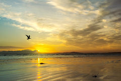 Beach Sunset With Sea Gull Silhouette, Western Cape, South Africa. Royalty Free Stock Photography