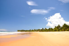 Beach of Taipu de Fora, Bahia (Brazil). Beach at low tide with palms on background, Taipu de Fora, Bahia (Brazil stock images
