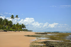 Beach of Taipu de Fora (Bahia, Brazil). Beach of Taipu de Fora at low tide with palms on background and cliffs on foreground (Bahia, Brazil stock image