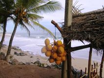 On the beach of Tangalle / Sri Lanka Stock Image