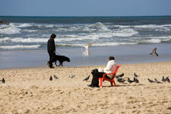 The beach in Tel Aviv. The man on the beach is sitting on the chair and feeding seagulls with silhouette of walking man with dog in the background Stock Image