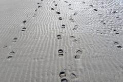 Beach Terschelling, The Netherlands Stock Photos