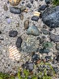 Beach texture 1. Stones sand and shell Royalty Free Stock Photography