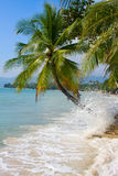 Beach in Thailand. Stock Images