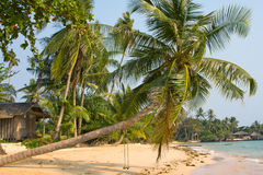 Beach in Thailand. Tropical beach with exotic palm trees on the sand Stock Image