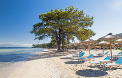 Beach in Thasos. Beach (Pachis) in Thasos island, Greece Royalty Free Stock Photography