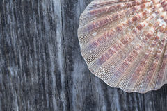 Beach theme wood background Royalty Free Stock Photo