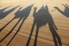 Beach time camel ride shadows Stock Photography