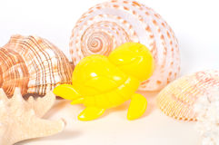 Beach toys and seashells on white background Royalty Free Stock Images