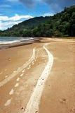 Trinidad Beach tracks. Vehicle tracks on a beach in the caribbean Stock Image