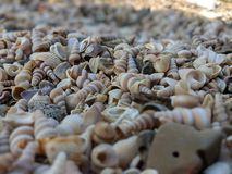 Beach of treasure royalty free stock images