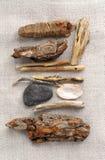 Beach treasures. Arrangement of beach treasures - twigs, seashells, pebbles - collected on sea shore Royalty Free Stock Photography