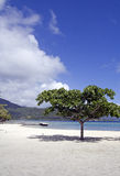 Beach tree Royalty Free Stock Photography