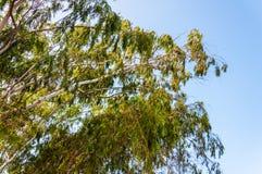 Beach tree against blue sky Stock Photos