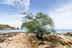 Beach Tree and blue sea Stock Images