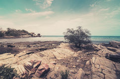 Beach Tree and blue sea vintage Royalty Free Stock Image