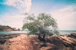 Beach Tree and blue sea vintage Stock Photos