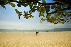 Beach and tree leaf Stock Image