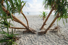 Beach and Tree, Lipe island Royalty Free Stock Image