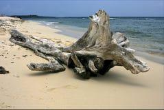 Beach and tree in  republica dominicana Stock Image