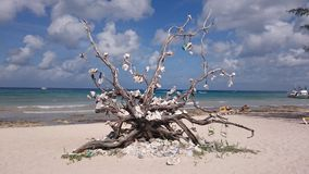 Beach Tree. Shell tree on Cozumel Royalty Free Stock Image
