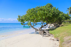 Beach. Tree beach with white sand Stock Photo