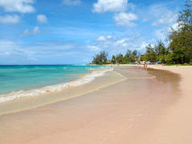 Beach with trees Royalty Free Stock Photos