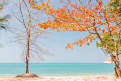 Beach and trees change color in summer Royalty Free Stock Images