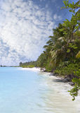 Beach  with trees at the cyan sea. Maldives Royalty Free Stock Photography