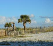 Beach Trees Stock Photo