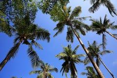 Beach and trees, Phra Ae Beach, Ko Lanta, Thailand Royalty Free Stock Photography