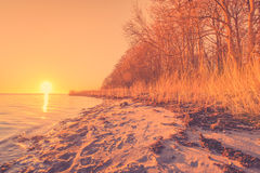 Beach with trees in the sunrise. By the ocean Stock Image