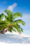 Beach on tropical island Royalty Free Stock Images