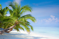 Beach on tropical island Stock Photos