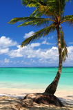 Beach of a tropical island. Sandy beach of a tropical island with palm tree Stock Photo
