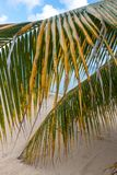 Beach on tropical island. Clear blue water, sand Royalty Free Stock Photo