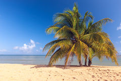 Beach on tropical island. Clear blue water, sand Royalty Free Stock Photos